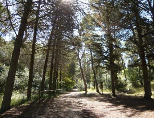 Da esplorare: la Foresta Mercadante